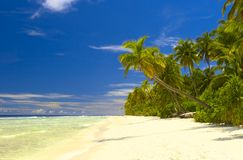 Het tropische bos van Nice op het strand in Indische Oceaan Royalty-vrije Stock Foto's
