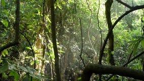 Het tropische bos, het zonlicht en het water castreren stock footage