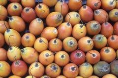 Het Tropische fruit van de boomtomaat Stock Afbeelding