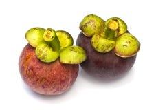 Het tropische fruit van de mangostan Stock Fotografie