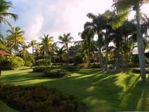 Het tropische gebladerte van installatiesbomen Royalty-vrije Stock Foto's