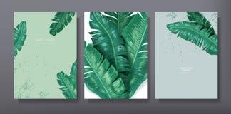 Het tropische in groet of uitnodigingsontwerp van het kaartmalplaatje, reeks van affiche, vlieger, brochure, dekking, partijrecla Royalty-vrije Stock Foto's