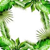 Het tropische kader van de de bladerenpalm van Hawaï in een waterverfstijl Stock Foto's