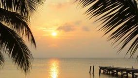 Het tropische landschap van de palmzonsopgang stock footage