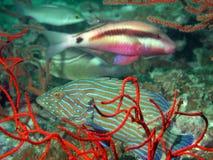 Het tropische Overzeese Leven royalty-vrije stock foto's