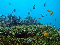 Het tropische Overzeese Leven stock afbeeldingen