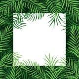 Het tropische palmblad van het grenskader royalty-vrije illustratie