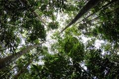 Het tropische regenwoud Royalty-vrije Stock Fotografie
