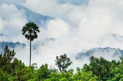 Het Tropische Regenwoud Stock Foto