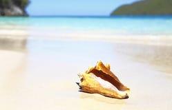 Het tropische strand van de zeeschelp Stock Foto