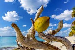 Het tropische Strand van het Eiland Stock Afbeeldingen