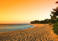 Het tropische strand van het pictogram Stock Foto's