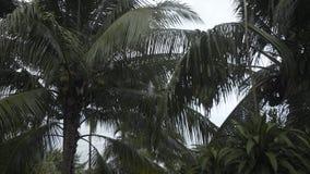 Het tropische van de de palmenzomer van de regenwoudboom regenwoud van de tijd Thaise Thailand, natuurlijk, openlucht, water stock footage