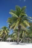 Het tropische Witte Strand van het Zand, Palmen Stock Afbeeldingen