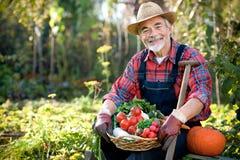 Het tuinieren Royalty-vrije Stock Foto
