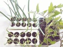 Het tuinieren Aard Royalty-vrije Stock Foto