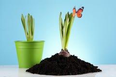 Het tuinieren Concept! Royalty-vrije Stock Foto's