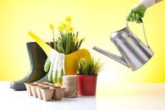 Het tuinieren concept met de persoon het water geven lentebloemen Royalty-vrije Stock Foto's