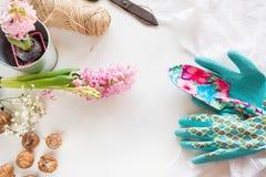 Het tuinieren concept Stilleven van zaailingshyacint, tuinhulpmiddelen, schaar, streng, knol-bollen gladiolen met exemplaarruimte royalty-vrije stock afbeelding