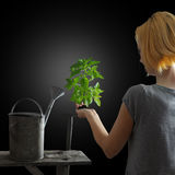 Het tuinieren concept - vrouw die een installatie houdt Stock Fotografie