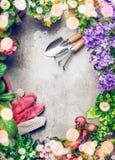 Het tuinieren de achtergrond met assortiment van kleurrijke tuin bloeit in potten en het tuinieren hulpmiddelen, hoogste mening Royalty-vrije Stock Afbeeldingen