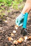 Het tuinieren De handen van Kaukasische actieve vrouw zaaien (het zaaien) Stock Afbeelding