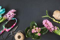 Het tuinieren de lenteconcept met roze calanchoe en hyacint en hulpmiddelen op zwarte raad De ruimte van het exemplaar Hoogste me Stock Afbeelding