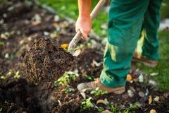 Het tuinieren - de mens die de tuingrond met graven schoffelt stock afbeeldingen