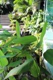 Het tuinieren in de stad Royalty-vrije Stock Foto's