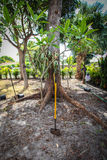 Het tuinieren en het modelleren in Florida Stock Afbeeldingen
