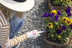 Het tuinieren en het planten van bloemen in de binnenplaats stock fotografie