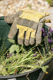Het tuinieren handschoenen Stock Foto's