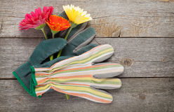 Het tuinieren handschoenen en gerberabloemen Stock Foto