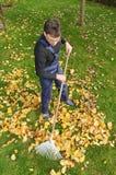 Het tuinieren, het harken gaat in de herfst weg Stock Foto