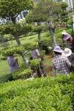 Het tuinieren in het park Stock Foto's