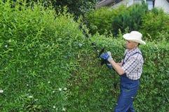 Het tuinieren, het snijden haag Royalty-vrije Stock Foto's