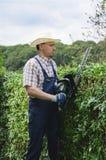Het tuinieren, het snijden haag Stock Foto