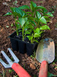 Het tuinieren Hulpmiddelen Royalty-vrije Stock Afbeeldingen