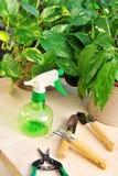 Het tuinieren hulpmiddelen en houseplants stock foto's