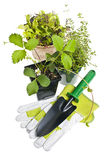 Het tuinieren hulpmiddelen en installaties royalty-vrije stock afbeeldingen