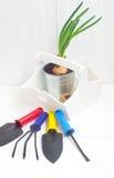Het tuinieren hulpmiddelen en spruiten van ui Royalty-vrije Stock Fotografie