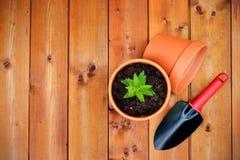 Het tuinieren hulpmiddelen en voorwerpen op oude houten achtergrond Stock Foto