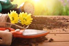 Het tuinieren hulpmiddelen voor bomeninstallaties en bloemen en aardbackgrou Royalty-vrije Stock Foto's