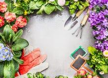 Het tuinieren kader met tuinhulpmiddelen, verse mooie tuinbloemen in potten Royalty-vrije Stock Foto