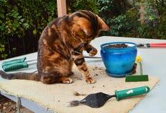 Het tuinieren kat Stock Foto