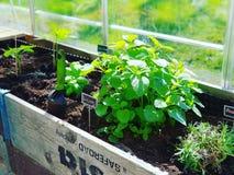 Het tuinieren kruiden Royalty-vrije Stock Foto's