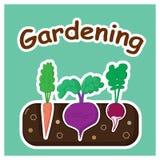 Het tuinieren met groenten Stock Afbeelding