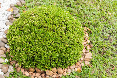 Het tuinieren met struiken Royalty-vrije Stock Foto