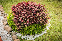 Het tuinieren met struiken Stock Afbeelding