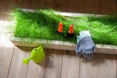 Het tuinieren nieuwe hulpmiddelen, rietdienblad Royalty-vrije Stock Afbeeldingen